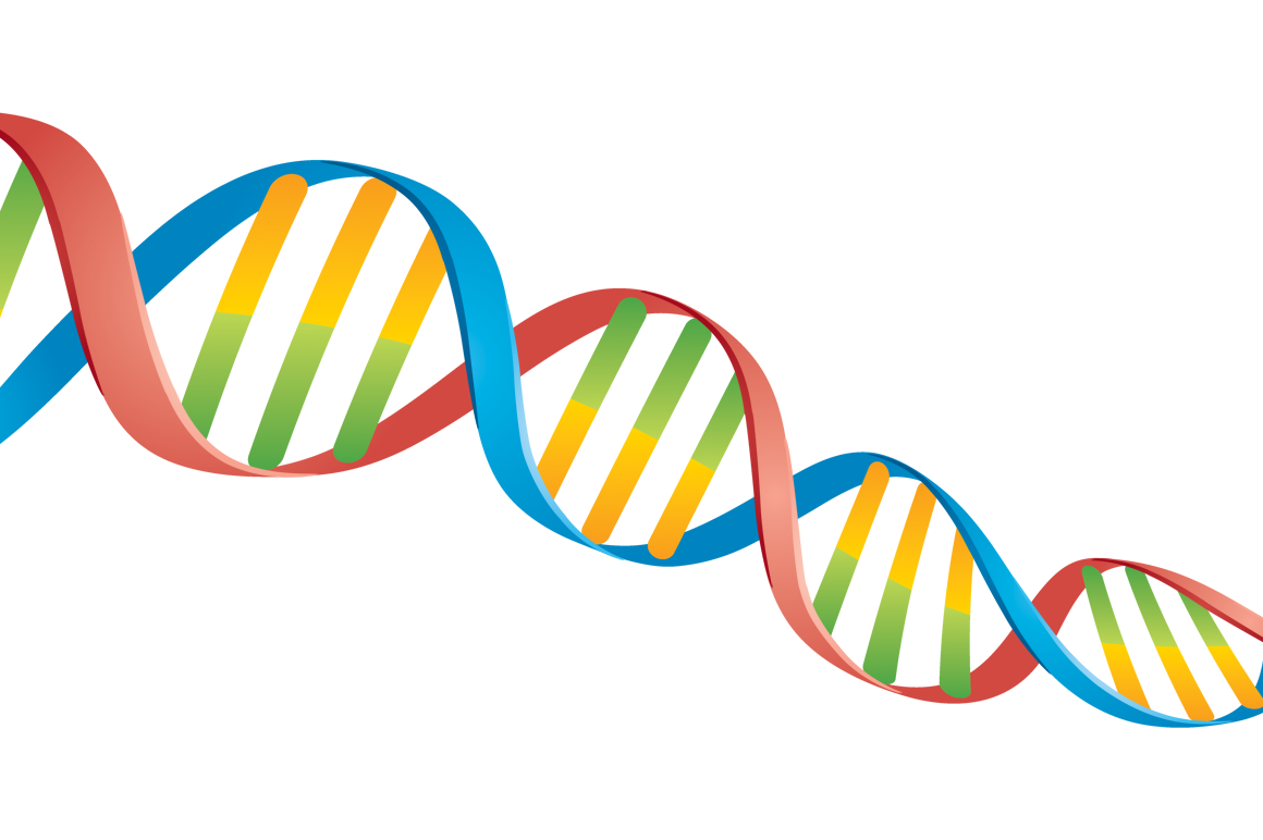 Dna Double Helix Model Png Www Pixshark Com Images